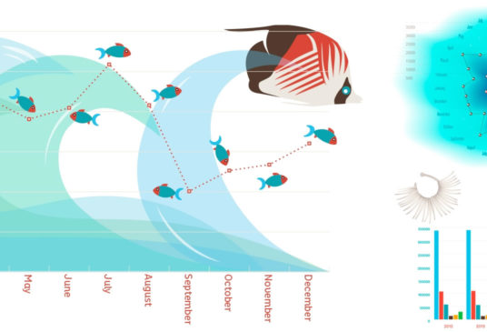 Infographics and bespoke illustrations